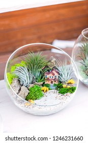 A small garden with lush plants, succulents, stones and colored white sand, a decorative clay house in a glass vase stands on a table in the room. ( florarium )
