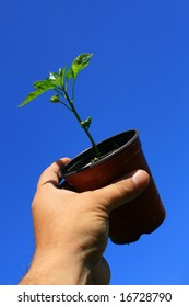 A small garden pot being held aloft containing a growing green pepper plant, set against a bright and clear blue sky