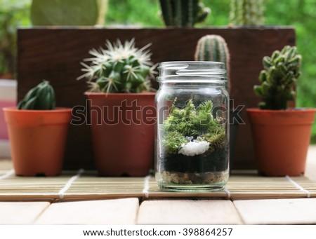 Small Garden Terrarium Bottle Cactus Plants Stock Photo Edit Now