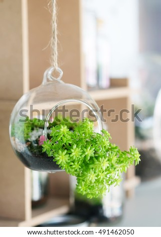 Small Garden Terrarium Bottle Glass Hanging Stock Photo Edit Now