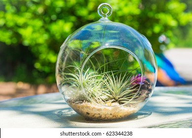 Small garden of terrarium bottle on table with green background.