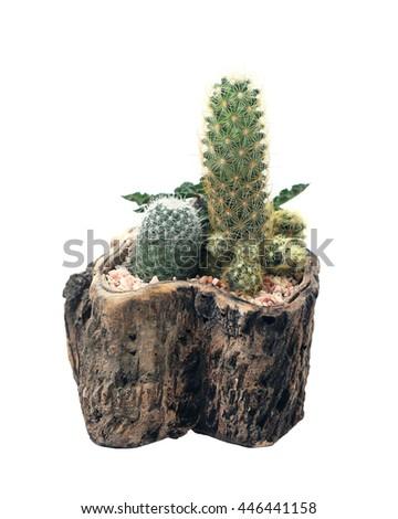 Small Garden Terrarium Cactus Plants On Stock Photo Edit Now