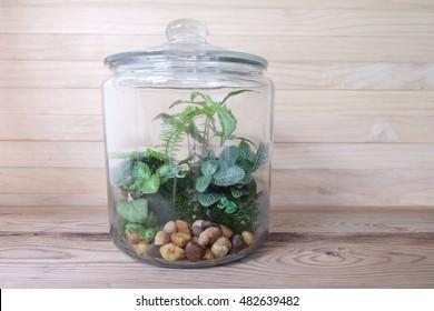 small garden terrarium plants wooden background