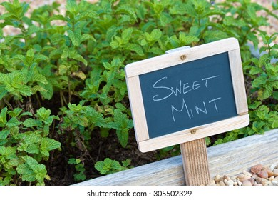 Small garden with a wooden chalkboard sign displaying the Sweet Mint description for the herb.