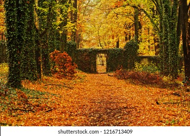 small gate at the abandoned cemetery with autumn color