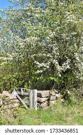 Small gate by a dry stone wall in spring season