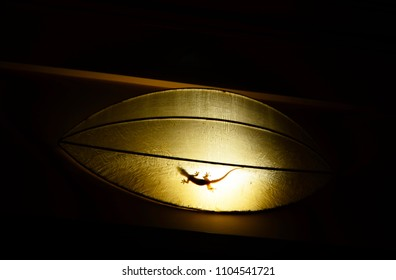 A small gecko is resting inside a traditional Vietnamese lamp. The photo is tones of sepia. The light is shining behind the gecko, so that his feet and tail appear translucent.