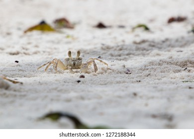 A small Ghost Crab running on the beach in Mafia Island, Tanzania.