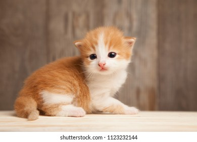 small ginger kitten on background of old wooden boards.