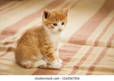 small ginger kitten on background.