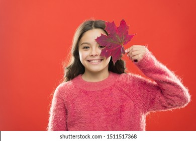 Small girl smiling with maple leaf. Maple syrup is often used as condiment for pancakes waffles oatmeal or porridge. Ingredient in baking and sweetener. Maple syrup. Little child hold maple leaf.