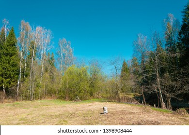 A small glade with a birch stump and old dry grass on a sunny spring day.