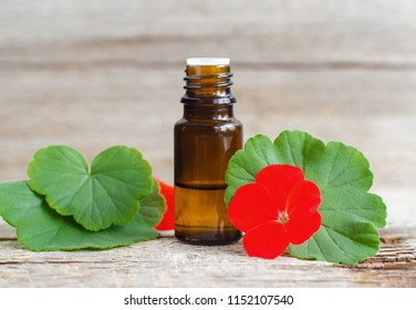 Small glass bottle with essential geranium oil on the old wooden background. Geranium leaves and flowers, close up. Aromatherapy, spa and herbal medicine ingredients. Copy space.