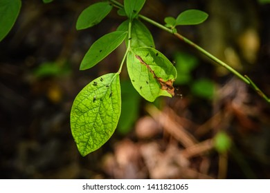 Small gnats flying around some green leaves