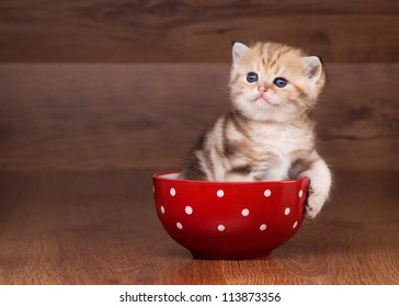 Kittens in Cups Images, Stock Photos & Vectors | Shutterstock