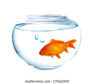Small goldfish in a fish tank with bubbles of air