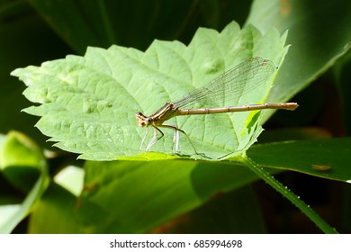 A small graceful dragonfly and beautiful green plant leaves