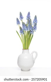 Small Grape Hyacinths in a small white vase on a white shelf