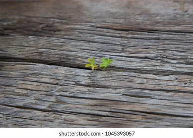 Small grass in board
