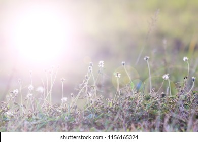 Small grass flowers focus selected background.
