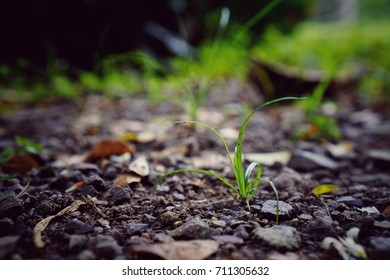 Small grass is growing, business concept
