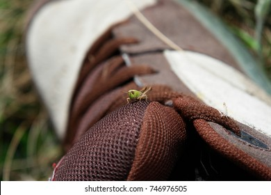 A small grasshopper jumped on a shoe during a travel in mountains.