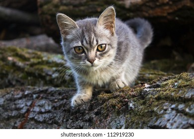 Small gray cat on wood