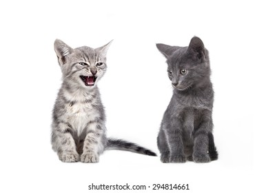 Small gray cats isolated on white background