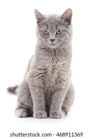 Small gray kitten isolated on a white background.