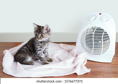 Small gray kitten on the floor on a plaid near the electric heater.