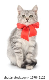 Small gray kitten with red ribbon on a white background