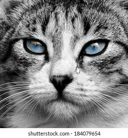 Small gray tabby cat portrait.