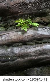 small green fern plant growing on sandstaone rock formation dark
