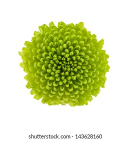 Small green flower isolated on white background