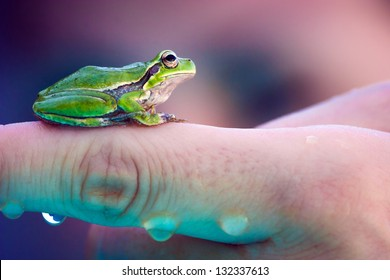 Small green frog on a finger