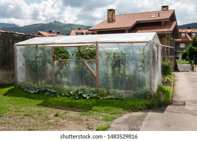 small green house made of plastic or small plastic hothouse or domestic greenhouse