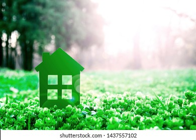 Small green house on beautiful lawn  in sun glare against distant forest trees. Eco house concept.