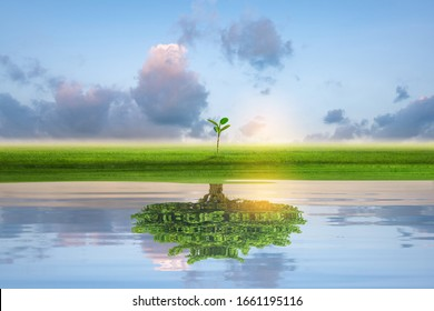Small green island with lonely tree reflection in quiet water of the ocean. Financial business Concept.
