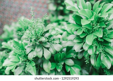 the small green leaf