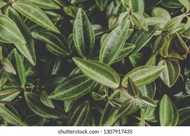Small green leafs