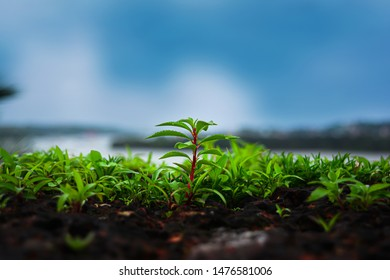 Small green plant and beautiful blue sky