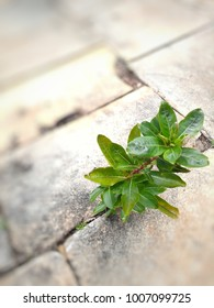 Small green plant growing in the flaws of the stone floor. It can mean achievement, overcoming difficulties.