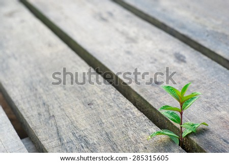 Small Green Plant Growing Gap Between Stock Photo (Edit Now