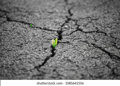 A small green plant grows through urban asphalt ground. Green plant growing from crack in asphalt on road. Green sprout growing on crack street, soft focus, blank text.