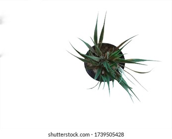 Small green plant isolated on white background.