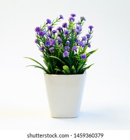 Small green plant with purple flowers in ceramic pot on white background