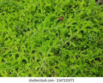 Small green plant texture background