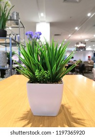 Small green plant in white pot on wooden table