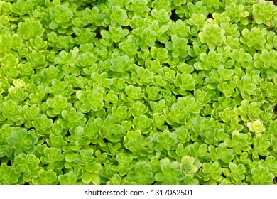 Small green plants as a full frame image