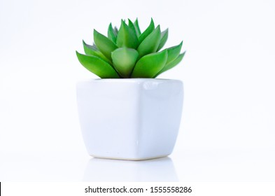 Small green plants in white pots with is isolated from a white background.Copy space.